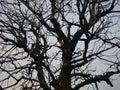 árbol marchitado Imagen de archivo