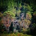 árboles costeros Imagenes de archivo