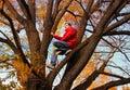 image photo : Autumn Trees