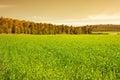 är det tonade fältet och träd för grönt gräs för bild i skogbild retro Royaltyfria Bilder