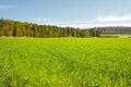 är det tonade fältet och träd för grönt gräs för bild i skogbild retro Royaltyfri Fotografi