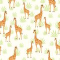African Giraffe with Background Elements in Pale yellow grassland,Vector design of cartoon animal illustration Royalty Free Stock Photo