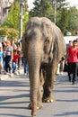 Éléphant dans la rue Photographie stock libre de droits