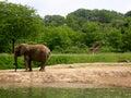 Éléphant et giraffes Images libres de droits