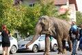 Éléphant marchant par la foule Photo stock