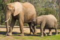 Éléphants de maman et de chéri Photo stock