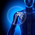épaule omoplate clavicule os d anatomie Images stock