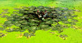 étang de lotus en parc Image stock