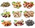 Сollection of ripe nuts and seeds. Royalty Free Stock Photo