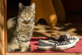 сat and shoe on the threshold of house cat sitting near sunny weather Stock Photo