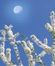 śniadanio-lunch wiosna drzewo Obraz Royalty Free