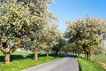Αλέα των κεράσι-δέντρων Στοκ Φωτογραφία