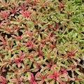 κήπος bromeliad Στοκ εικόνες με δικαίωμα ελεύθερης χρήσης