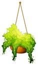 κρεμώντας φυτό Στοκ εικόνες με δικαίωμα ελεύθερης χρήσης