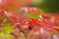 κόκκινο φυτό Στοκ φωτογραφία με δικαίωμα ελεύθερης χρήσης
