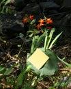 Λουλούδια και post-it Στοκ φωτογραφίες με δικαίωμα ελεύθερης χρήσης