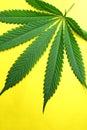μαριχουάνα φύλλων Στοκ φωτογραφία με δικαίωμα ελεύθερης χρήσης