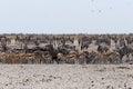 συσσωρευμένος waterhole με τους ε έφαντες zebras αντι ορκά α και orix Στοκ Φωτογραφίες