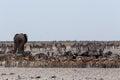 συσσωρευμένος waterhole με τους ε έφαντες zebras αντι ορκά α και orix Στοκ Εικόνες