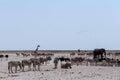 συσσωρευμένος waterhole με τους ε έφαντες zebras αντι ορκά α και orix Στοκ φωτογραφία με δικαίωμα ελεύθερης χρήσης