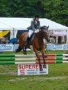 το άλογο που πηδά εμφανίζει Στοκ Εικόνες