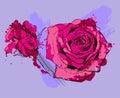 τριαντάφυ  α  ύο Στοκ εικόνα με δικαίωμα ελεύθερης χρήσης