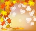 φθινόπωρο thanksgiving Στοκ Εικόνες
