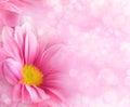 Абстрактные флористические предпосылки Стоковое Изображение RF