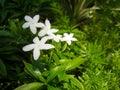 бе ые цветки Стоковые Фотографии RF