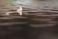 брайн насти и крышу черепаха Стоковое фото RF