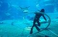 во о аз очищает аквариум Стоковое Изображение