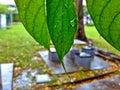 выхо? ит raindrops Стоковое Изображение RF