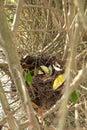 гнез о птицы Стоковое Изображение