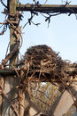гнез о птицы Стоковые Изображения RF