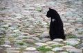город кота Стоковое Изображение RF