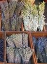греческий травяной чай Стоковое Фото