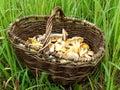 грибы в корзине Стоковая Фотография RF