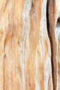 грубая древесина пня Стоковые Фото
