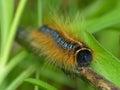 гусеница на высушенном стержне Стоковое фото RF