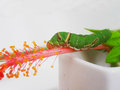 гусеница Стоковое Изображение RF
