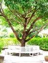 дерево манго Стоковое Фото