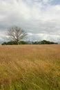дерево  уга Стоковые Изображения RF