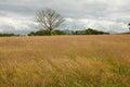 дерево  уга Стоковые Фотографии RF