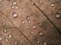 дож евая кап я на сухих  ист Стоковые Изображения RF