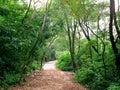 Дорога парка Стоковое Изображение