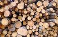 древесина вносит пре посы ку в журна Стоковые Фотографии RF