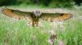 image photo : European Eagle Owl