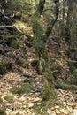 зако  ованная пуща Стоковое Фото