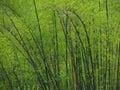 зе еный бамбук в весеннем времени Стоковые Фотографии RF
