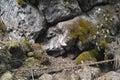 камень стены горы Стоковые Фото